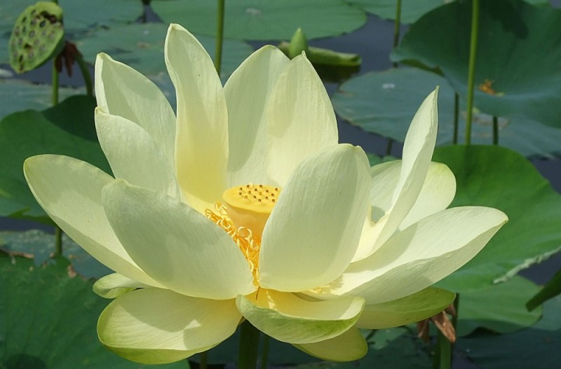 Lotus place lotus place the lotus flower has its origins and roots in the muddy waters below the surface yet above the water it is a beautiful resilient flower mightylinksfo